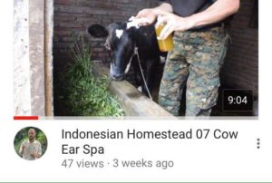 indonesian homestead 07