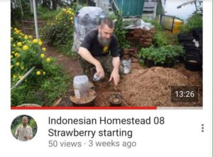 indonesian homestead 08