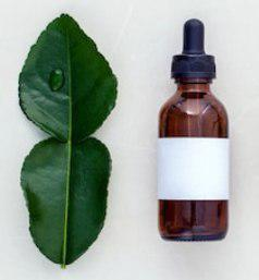 kafir lime leaves essential oil, essential oil malang, daun jeruk purut essential oil